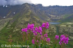 Summer Flowers and Hanging Valley